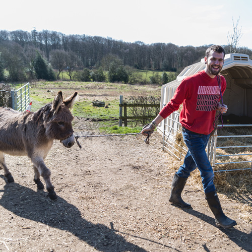 walking donkey